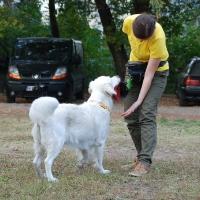 Stowarzyszenie Zwierzeta Ludziom - szkolenie psów_1