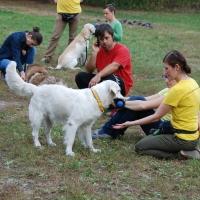 Stowarzyszenie Zwierzeta Ludziom - szkolenie psów_3