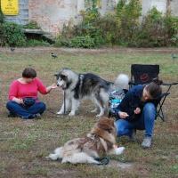 Stowarzyszenie Zwierzeta Ludziom - szkolenie psów_4