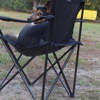 Stowarzyszenie Zwierzeta Ludziom - szkolenie psów_6